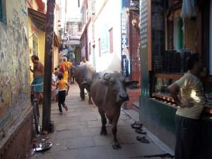 Varanasi streets.1