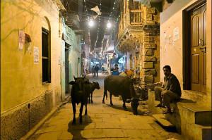 Cows in narrow old city street at night. Varanasi, Uttar Pradesh, India