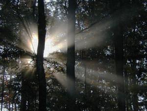 Luce tra gli alberi