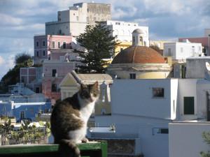 Ponza. Veduta con gatto