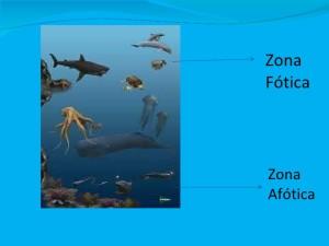 Zona fotica e zona afotica