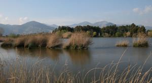 Laghetto_degli_Alfieri-810x446_c