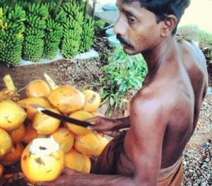 Sri Lanka. King coconut