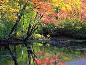 Alberi sul fiume..2