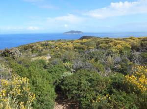 Macchia mediterranea sfondo Zannone. Resized
