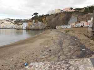 Meduse stracquate sulla spiaggia di Giancos.2