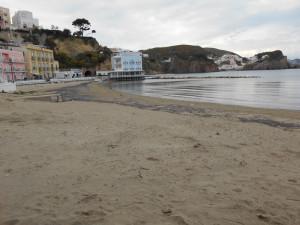 Meduse stracquate sulla spiaggia di Sant'Antonio.1