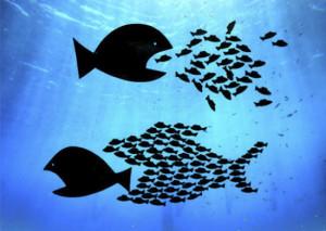 Pesce-grande-mangia-pesce-piccolo.-O-no