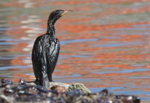OIL SPILLS IN GENOVA
