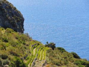 2_-I-terrazzamenti-sulle-pendici-del-Monte-Guardia