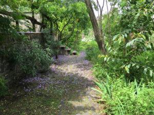 Tappeto di fiori di Jacaranda