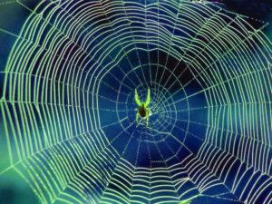 La tela del ragno copia