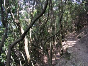 Zannone bosco di lecci