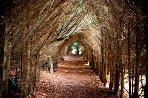I boschi delle favole