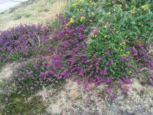 La vegetazione intorno al Faro