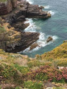 Vegetazione e rocce di Cap Frehel
