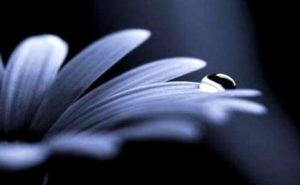 fiore-blue-black