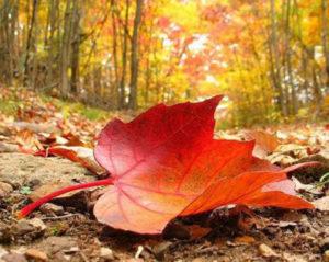 foglie-dautunno-1