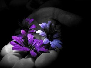 prece-in-blu-violet