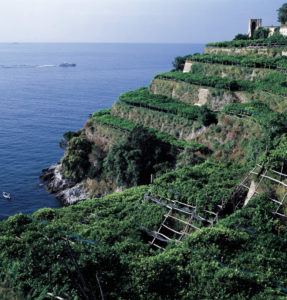 terrazzamenti-a-limoni-sulla-costiera-amalfitana