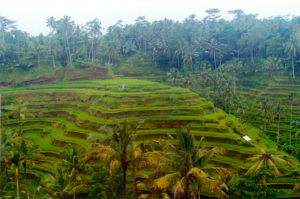 terrazzamenti-isola-di-bali-indonesia