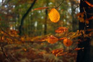 autunno-foglie-2