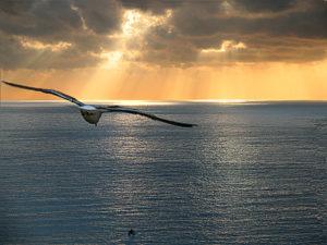 gabbiano-verso-il-tramonto