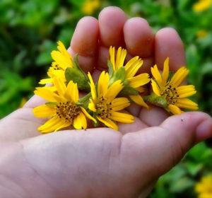 fiori-in-mano