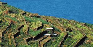 terrazzamenti-a-pantelleria