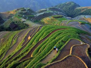 terrazze-coltivate-a-riso-a-long-ji-cina