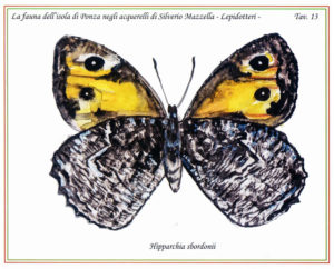 ponza-grayling-butterfly
