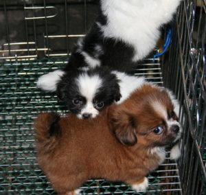 cagnolini-teneri-teneri