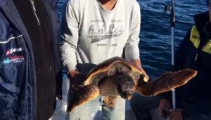 la-tartaruga-marina-1