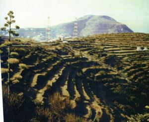 parracine-terrazzamenti-sopra-tre-venti