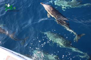 delfino-comune