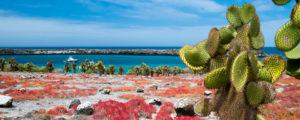 Beau paysage de l'île du Sud Galapagos Plaza