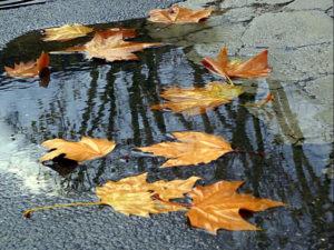 foglie-sullacqua-riflessi
