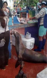 leone-marino-foto-da-lt-oggi