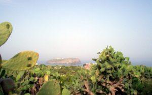 Fichi d'india a ventotene con sullo sfondo Santo Stefano