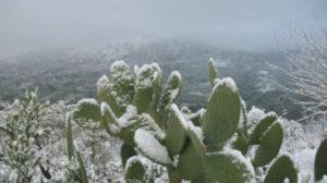 Freddo e neve. Fichidindia