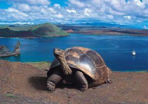 GalapagosTurtle