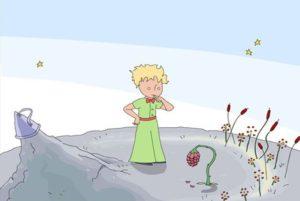 Piccolo principe. La rosa