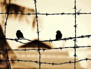 Remembering. Birds
