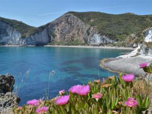Rose marine. Sfondo spiaggia Frontone