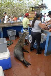 Teresa, la leonessa marina