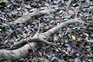 tronchi-a-terra-e-foglie-secche