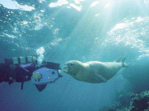 foto foca monaca.1